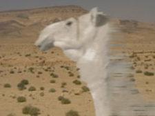 Aujourd'hui A. Zaatari. jpg