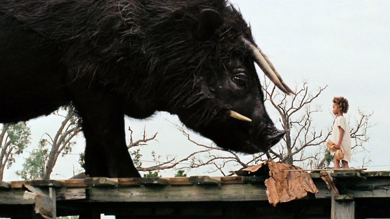 Les bêtes du sud sauvage 1