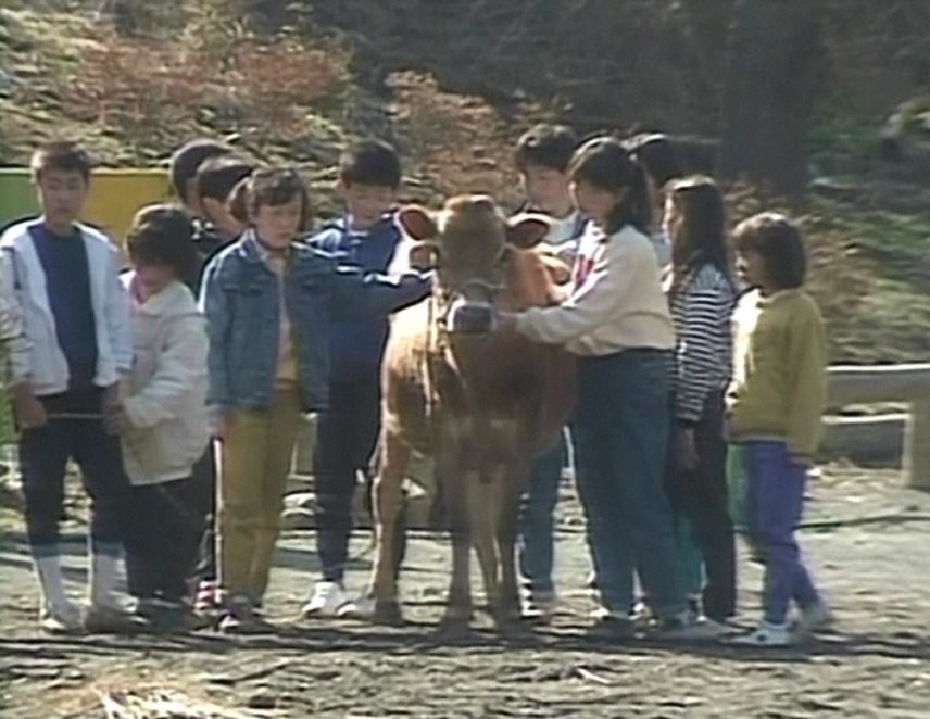 Lesson-from-a-Calf-1