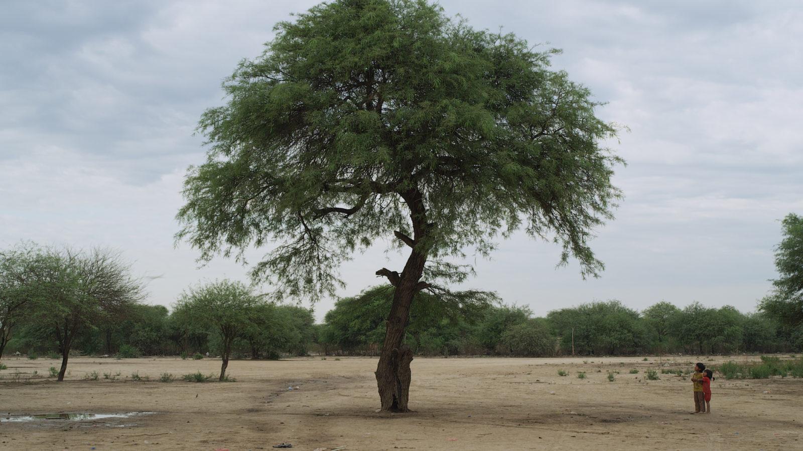 +nosilatiaj-la-belleza-01-tree-and-wichi-childs-(18x10cms-300dpi)-10-01-12 Kopie