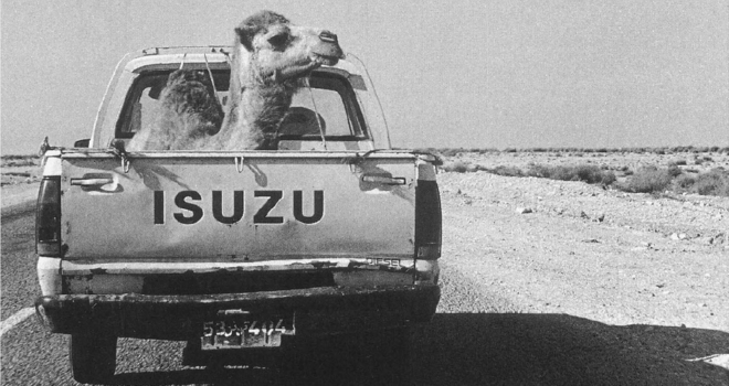 The Mising Camel (Morocco/Mauritania)