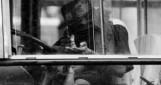 Autobus 174