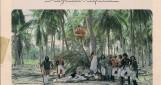 Bolivar, symphonie tropicale