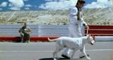 Bombón, le chien
